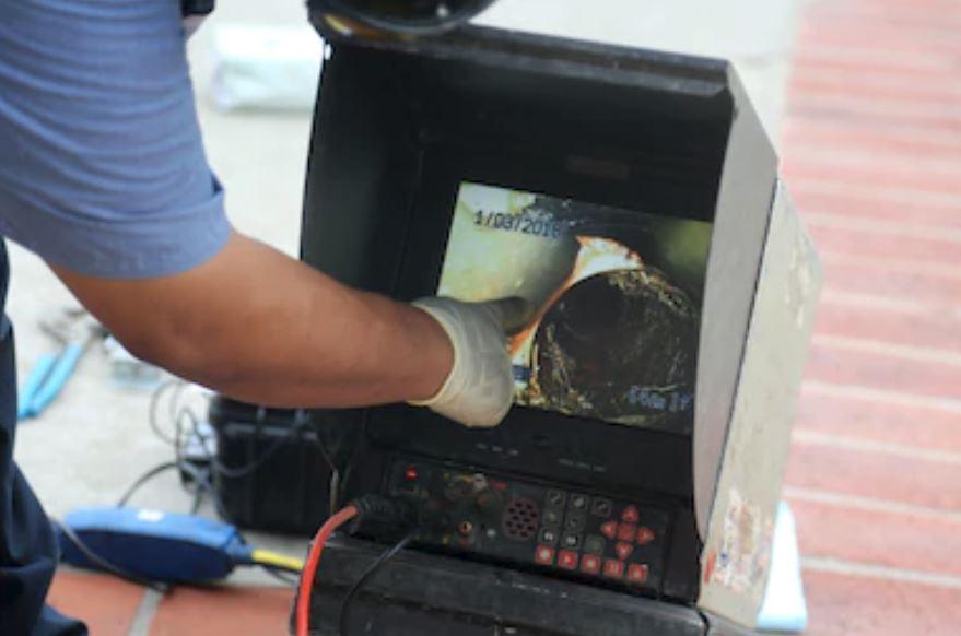 sewer check eel